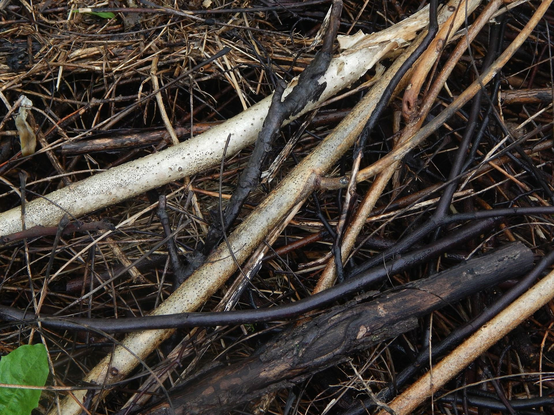 Wet yard waste including sticks, tree branches and dried grass
